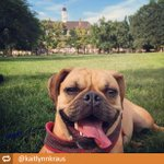 We hope you enjoyed a lazy #LaborDay on the Quad, like @kaitlynnkraus & her adorable pup http://t.co/OIRL7TWxAb http://t.co/bBHPsEvJy7