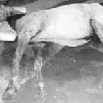 """@RevistaSemana: Otro caballo cochero muere en #Cartagena --> http://t.co/tX4n72ZkfX http://t.co/qZEE1t4aW3"" Esto me duele y da vergüenza!"