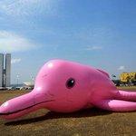 RT @g1: ONG põe boto cor-de-rosa inflável no gramado em frente ao Congresso http://t.co/csZRWrmyAm #G1 http://t.co/0LHvOnAlaa