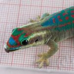 RT @NBCNews: Russias experiment on geckos having sex in space ends with five dead geckos http://t.co/MWbVDs63CJ http://t.co/CYRiFLpfOx