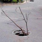 RT @DiariodeMorelos: FOTO: Un bache con árbol en Lomas de Ahuatlán #Cuernavaca #Morelos http://t.co/Ux7F7xcqKw || http://t.co/gJrspwH2hA
