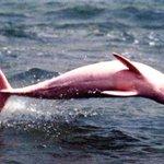 Más de 40 mil latinoamericanos piden a Colombia que no importe el pez mota. http://t.co/PNzXLk8arh http://t.co/TcWj7l66oF