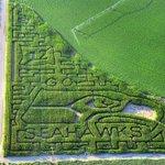 Seahawks corn maze in Pasco #gohawks #cornmaze http://t.co/LtQ5vMVEBN