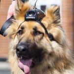 RT @PNationale44: Des GoPro pour les chiens policiers de #Nantes : pour que leurs aboiements ne soient plus jamais mis en doute. http://t.co/yoi9NPorDX