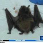 RT @KOAA_5: #Update: A total of 13 kids handled a rabid bat at a Pueblo apartment http://t.co/mbFYjz5rBb http://t.co/unD6CZF6sl
