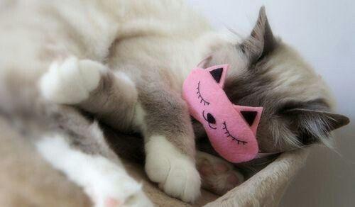 Biz Cuma'ya kadar uyusak? :) http://t.co/seYUFhng4k