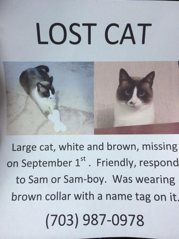 Please RT, my cat has been missing for 2 days now :( if you have any information please contact me http://t.co/rbP2jY4XDo