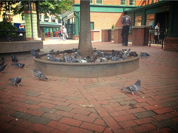 The Hatoful Boyfriend launch party is getting out of control. http://t.co/67PomZJmlC
