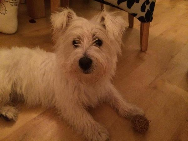 Dog found tonight on Kensington Rd, #Chorlton. Get in touch if it's yours & we can hopefully reunite you... http://t.co/Hx3RjgSEc0