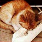 Günaydınn http://t.co/qSbTyoTM7w