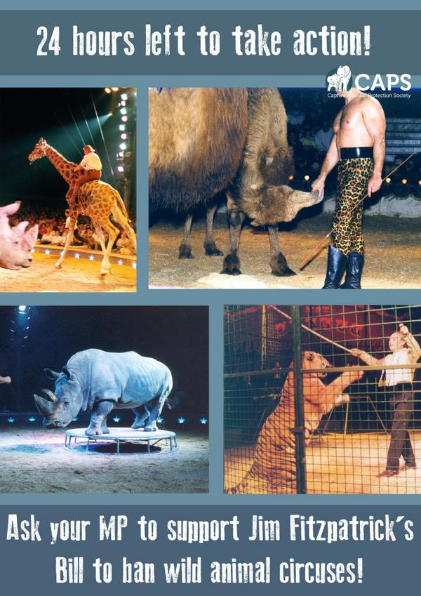 24 hours to act for wild animals in English circuses! http://t.co/vcWH6mr2Kr #circusban http://t.co/pgHAuFSoK8