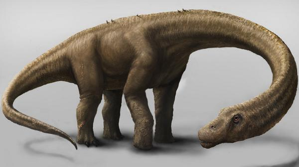 Fossils found in Argentina represent the most complete giant sauropod dino ever discovered http://t.co/YpFx7z1uUh http://t.co/dV5hqEBJdN