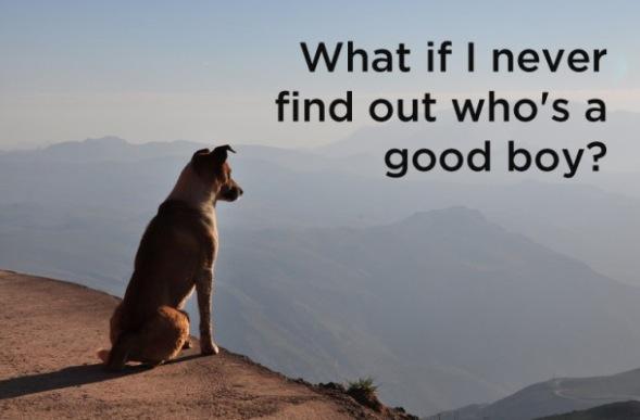 RT @briandavidearp: Deep dog thoughts ... http://t.co/cb8MyoyEOt