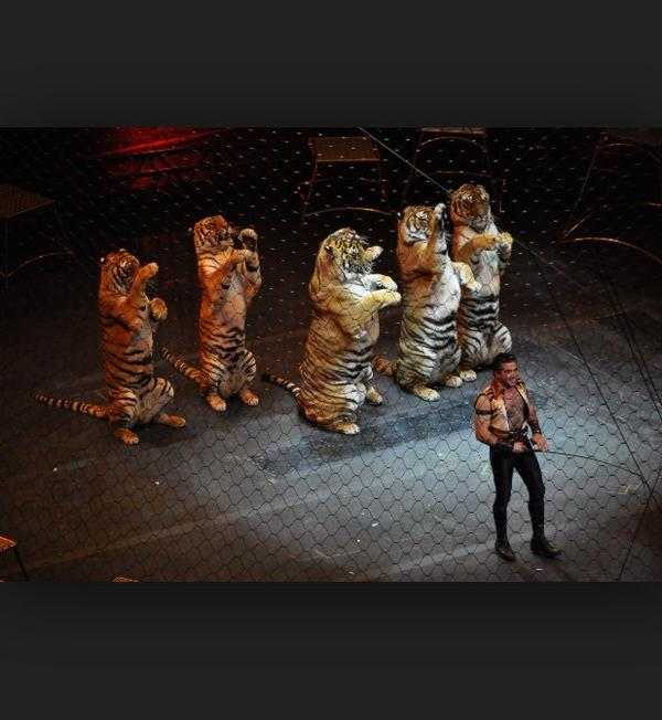 How is this still legal? Please let @RinglingBros know we don't support them abusing/using animals 4 entertainment http://t.co/Jhrfnknj4T