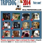 RT @TripeUK: We dont care if youre Scots-English or English-Scots. A dog is a dog for all that. Vote now http://t.co/tyZGVI6h2D http://t.co/8LRUBEFgtC