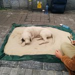 RT @GalwayGaillimh: Cool Sand Dog on Shop Street #Galway http://t.co/6SsSFoZkGi
