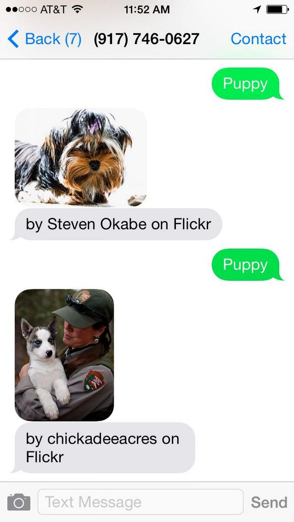 Ever wish there was an emergency puppy hotline? Thanks to @twilio MMS there now is! Text 'puppy' to (917) 746-0627: http://t.co/V4rWmwfH1k