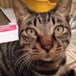 RT@zazieqluri今週土曜日9/20 午後1時〜3時 長野市保健所にて譲渡会が開かれます。可愛いワンちゃん猫ちゃんが優しい里親さんを待っています!我が家の預かりニャンのとらお君も参加します♪ #里親募集 #長野市 #拡散希望 http://t.co/38WU4tOF8J