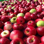 Wow! Did you know that each year 10-12 billion #apples are handpicked in #Washington? We love WA apples! http://t.co/jcUCMP6sKK