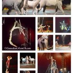 RT @CanadianMomEh: LAST WEEKEND #Montreal @theshrinecircus #review Use promo code FUN at checkout. http://t.co/qNSpZ5UBiS Pls RT http://t.co/noXqaKNWpc