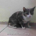 RT @URGENTPODR: Mary average little stray, indifferent probably cos has kitty cold. http://t.co/U97MwaCff5 #NYC #urgent #cats http://t.co/NDb9oxSLw3