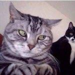quando vc tá no celular e alguém fica tentando ler http://t.co/Ml6yBKpORL