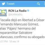 RT @Jorge_Opina: Hoy Mancuso calumnia a @AlvaroUribeVel y luego fiscalía deja libre a su hermano, o seré mal pensado? http://t.co/sMDT7MFPe6
