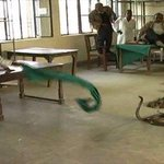 2 farmers empty 3 bags full of 40 snakes in busy tax office in Basti (near Lucknow).Because fed up of bribery demands http://t.co/2SEQ5mjqhs