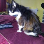 Help pls: My best mate's cat's gone missing from Nelson Avenue, North End, #Portsmouth. Pls RT. #FindWhiskers http://t.co/DUf9nu4jd3