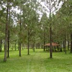 #Nicaragua ¡Respira aire puro! en Finca Forestal San Nicolas, Nueva Segovia Km 267 http://t.co/ADFJugiQ1E