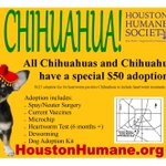 RT @HoustonHumane: Aye Chihuahua! All hw- chi & chi mixes at Houston Humane are just $50 the rest of this month! #houston #ayechihuahua http://t.co/ocXcZl7oDc
