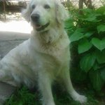RT @AndrejAleksov: Луѓе, сериозна е работава. Изгубено е куче по име Клеа, во насл. Хром. Aко ја видите обратете се кај @Dare_DT РТ!! http://t.co/ktG2ToQNKO