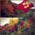 RT @nightdayphoto: #autumn hits #yeg! Edmonton is so gorgeous in the #fall! #autumn leaves #ilovethisplace http://t.co/XNE2LAWjKv