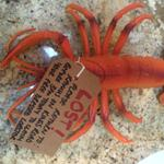 @ramusforfish @laurac311 Free Lobster! #findmylobsters #Ramus40 http://t.co/wENd8siqWs