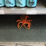 Some of these missing #lobsters may not have gone far #findmylobsters #Ramus40 http://t.co/vCNvMic2xD