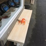 #Lobster spotted outside #Ramus40 #findmylobsters http://t.co/ItqIzAipfd