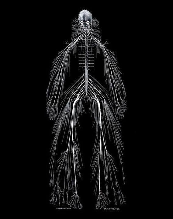 This is a model of the human nervous system. I keep staring and it only gets worse. http://t.co/ddW4LJNPXO