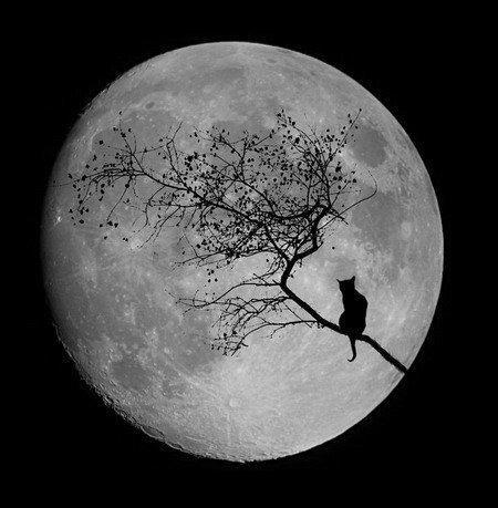 月にいるみたい (via vkontakte.ru) http://t.co/Qu4auF6jW1