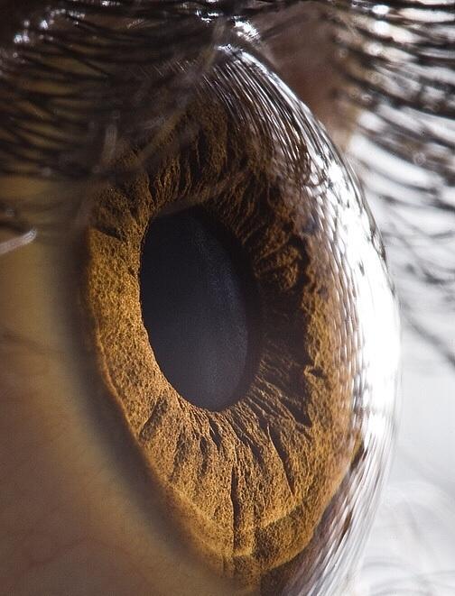HD close up of human eye: http://t.co/oGAi7xftfZ