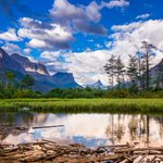 Driftwood and Pond Glacier National Park. http://t.co/QY3dacAami #glacier #NPS #Montana http://t.co/HvvXfqSdHn #environment #green