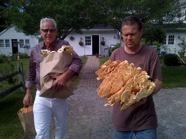 Mushroom time New England -wild foraged mushrooms #health benefits / Try Mushroom Tasting Menu: All Colors & Textures http://t.co/B3fZmtoTi0