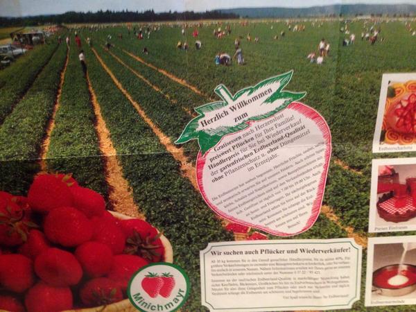 ドイツのイチゴ狩り、こんならしい…広大かつハウスじゃない… http://t.co/ELfZ3a0uXX