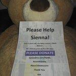 RT @st_udz: @MrPeterAndre PLsRT #abear2showucare Please Support 3yr old Sienna @sarahhancoxuk