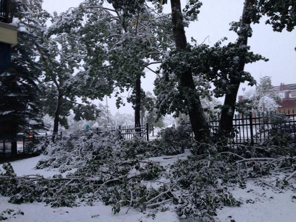 @CTVdavidspence In Woodlands, trees snapped everywhere. #yyc #yycsnow #storm http://t.co/axs1eNrFPr