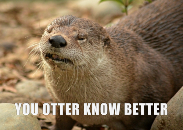 River otters are very sensitive to environmental pollution. Come on, humans, you otter know better! #RealAnimalTalk http://t.co/y9eHSXblfB