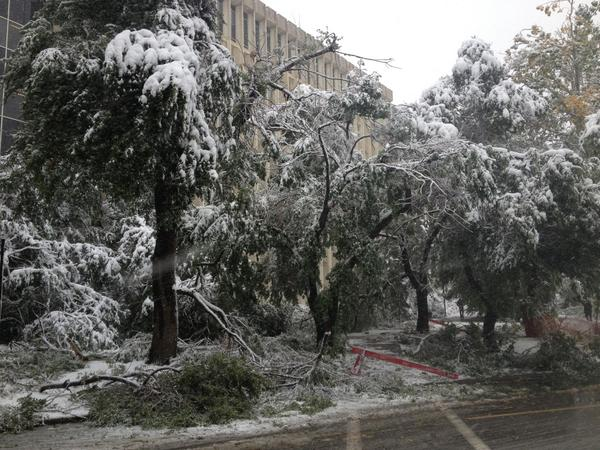 #UCalgary is open.  For safety, please avoid walking or parking under trees as we cleanup. #yycweather http://t.co/IKP56Zzriw