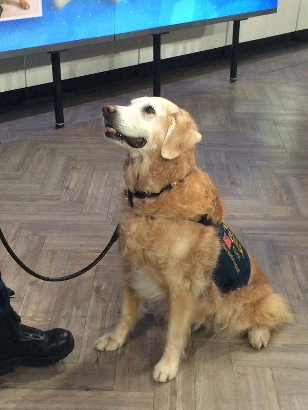 Bless you! RT @TODAYshow: The last-living rescue dog who was sent to Ground Zero. http://t.co/rpLu1wc6SU