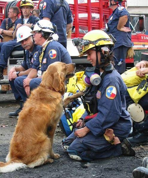 Great feature on @TODAYshow on the last living 9/11 search & rescue dog: http://t.co/nQEQvMRDiw http://t.co/Ntz4iKobkj #NeverForget911 #dogs