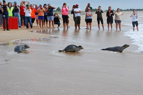 Photos from today's seal release @ Blue Shutters Beach. #MysticAquariumAnimalRescueTeam #SealRescueClinic http://t.co/HlVcm9Opr5