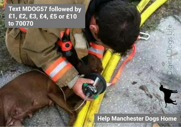 #ManchesterDogsHome  Pls RT http://t.co/69xsPoelU8